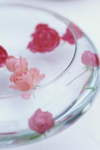 ガラス丸平器に浮かべたオールドローズの写真素材 [FYI03236639]