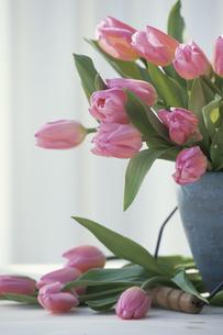 花瓶に生けたピンクチューリップの写真素材 [FYI03236641]