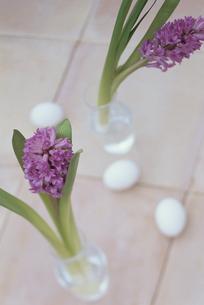 ガラス花瓶2個にヒヤシンスと卵3個の写真素材 [FYI03236659]