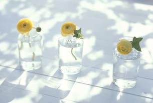 3個のガラス小瓶にイエローラナンキュラスの写真素材 [FYI03236662]