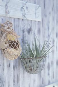 フックにかけたエアープランツ・貝殻入りメッシュ袋の写真素材 [FYI03236691]