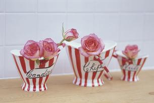 ポップ調なバケツに薄ピンクのバラの写真素材 [FYI03236736]