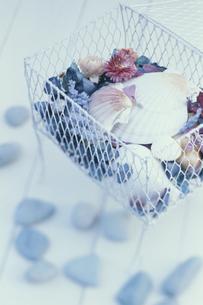 白ワイヤーボックスに入れた貝殻とポプリの写真素材 [FYI03236868]
