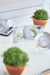 植物と時計の写真素材 [FYI03236895]