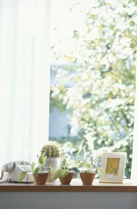 窓辺の植物の写真素材 [FYI03237071]