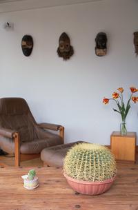 リビングルームとサボテンの写真素材 [FYI03237072]