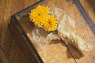 花の写真素材 [FYI03237123]