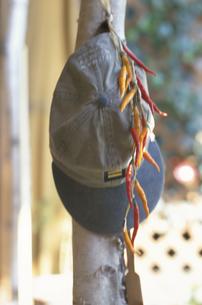 帽子とトウガラシの写真素材 [FYI03237175]