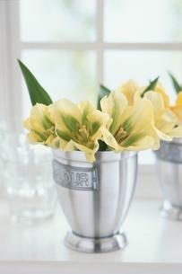 窓辺の花の写真素材 [FYI03237195]