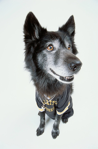 サッカーユニフォームを着た黒い犬の写真素材 [FYI03237319]