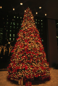 クリスマスツリーの写真素材 [FYI03237459]
