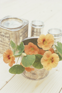 花と缶の写真素材 [FYI03237481]