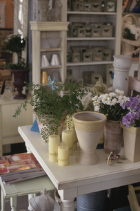 植木鉢とキャンドルの写真素材 [FYI03237517]