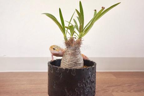 植物と爬虫類の写真素材 [FYI03237831]