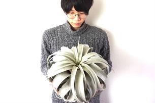 植物男子の写真素材 [FYI03237864]
