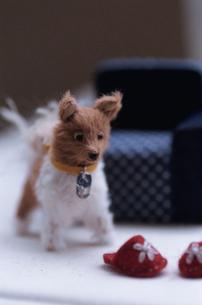 犬のぬいぐるみとスリッパの写真素材 [FYI03237974]