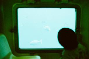 潜水艦の窓から魚を見る男の子の写真素材 [FYI03238189]
