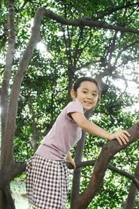 木に登る女の子の写真素材 [FYI03238427]