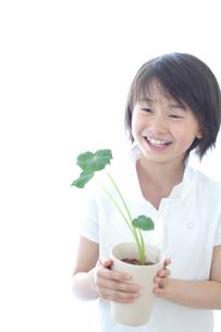 さといもの植木を持つ女の子の写真素材 [FYI03238552]