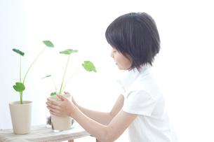 さといもの植木を持つ女の子の写真素材 [FYI03238554]