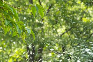 水しぶきを浴びる植物の写真素材 [FYI03238630]