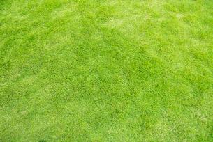 芝生の写真素材 [FYI03238638]
