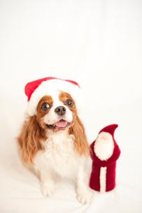 犬とサンタクロースの人形の写真素材 [FYI03238639]