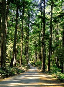 森林の写真素材 [FYI03238811]