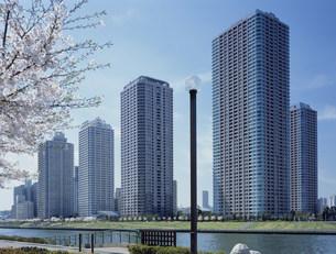 桜咲く高層住宅の写真素材 [FYI03239067]