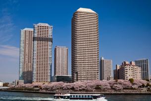 桜と高層マンション群と遊覧船の写真素材 [FYI03239528]