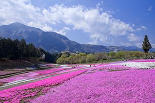 羊山公園の芝桜の写真素材 [FYI03239554]
