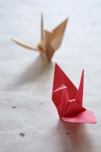 2羽の折鶴の写真素材 [FYI03239596]