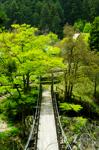 山間に架かるつり橋と新緑の写真素材 [FYI03240671]