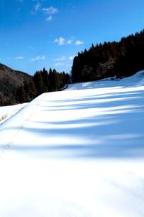 青空と雲の下田園の残雪に落とす木立の青い陰の写真素材 [FYI03240713]