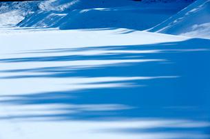 白い田園に落とす木立の青い陰の写真素材 [FYI03240720]