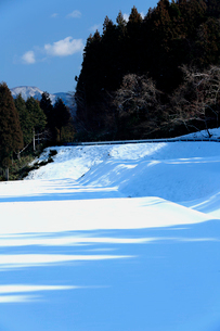 青空の下白い田園に落とす木立の青い陰の写真素材 [FYI03240722]