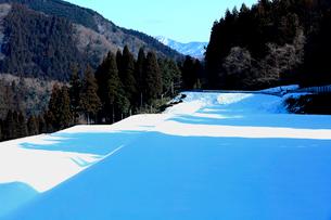 青空の下白い田園に落とす木立の青い陰の写真素材 [FYI03240724]