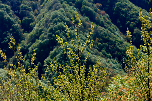 新緑の芽吹きが綺麗な5月の山の写真素材 [FYI03240789]