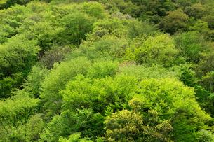 山肌の芽吹きが美しい新緑の山の写真素材 [FYI03240801]