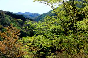 青空の山並と若葉の芽吹きが綺麗な冠山の写真素材 [FYI03240804]