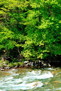 新緑の樹の下白い波頭を見せる清流の流れの写真素材 [FYI03240812]