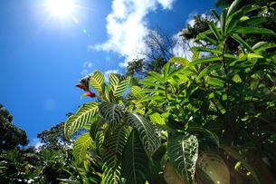 逆光に輝く青空と原始林の樹木の写真素材 [FYI03240821]