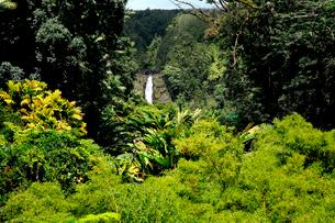 ジャングルの木々と滝のある風景の写真素材 [FYI03240856]