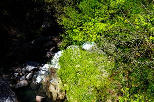芽吹きの緑が綺麗な猿渡渓谷の春の写真素材 [FYI03240905]