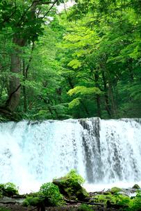 初夏の日差しを浴び新緑の緑にこだます調子大滝の水の音の写真素材 [FYI03240965]