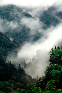 雨上がり山霧が沸き立つ板取渓谷の初夏の写真素材 [FYI03241002]