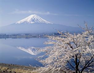 富士山と桜の写真素材 [FYI03241066]