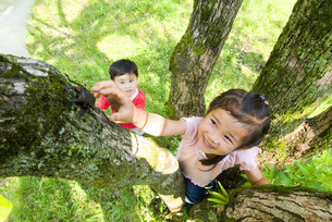 虫取りをする子供の写真素材 [FYI03241233]