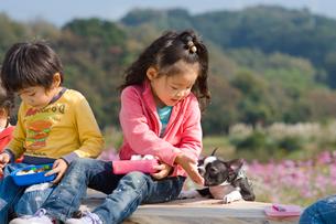 お花畑でお弁当を食べる子供達と犬の写真素材 [FYI03241304]