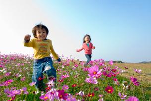 お花畑で遊ぶ子供達の写真素材 [FYI03241309]